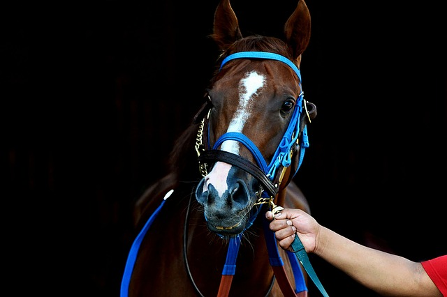 kůň na závody