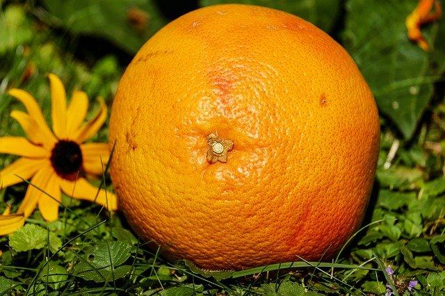 grapefruit v trávě