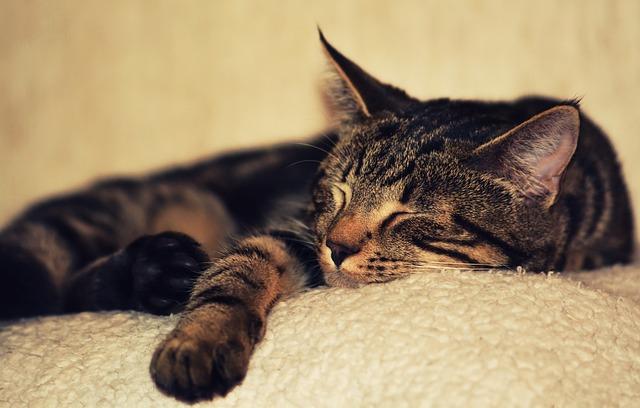 spící kočička