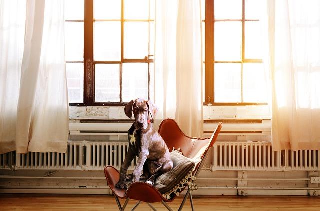 pes na židli
