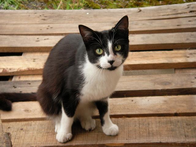 Kočka na paletě