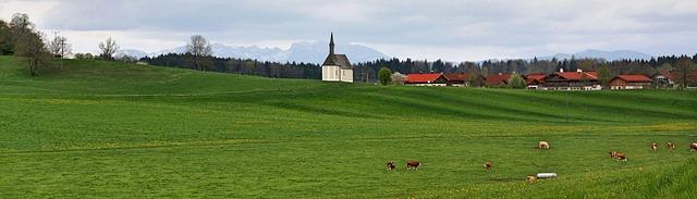příroda, zelená louka, květiny, krávy v povzdálí menší vesnice a kostelíček