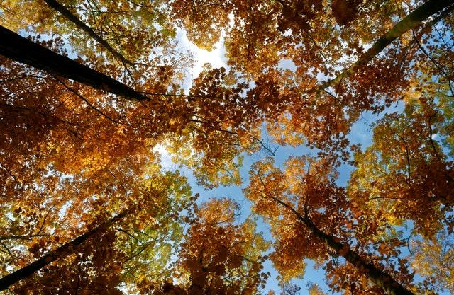 pohled do korun stromů, podzim.jpg