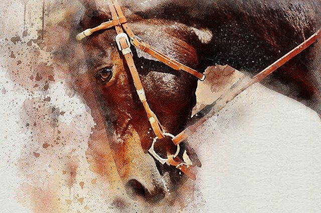 kůň v postroji